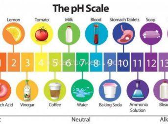 皮膚 ph ペーハー 酸性 アルカリ性